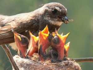 Baby-Birds-Dinner-Time-3