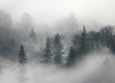 Trees_and_fog
